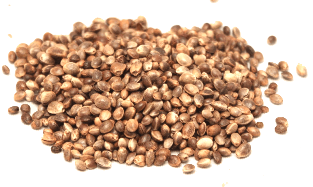 Living Earth Hemp – Seeds, Starts, Supplies for Central Oregon